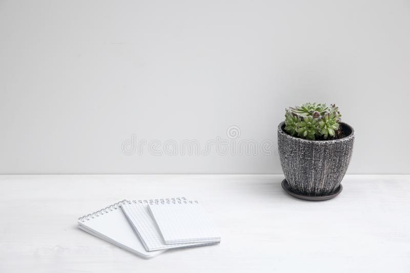 Sempervivum succulent plant in ceramic pot on white background with shadow stock images