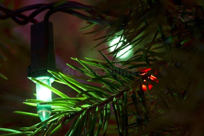 Sempreverde 2 della luce verde immagini stock