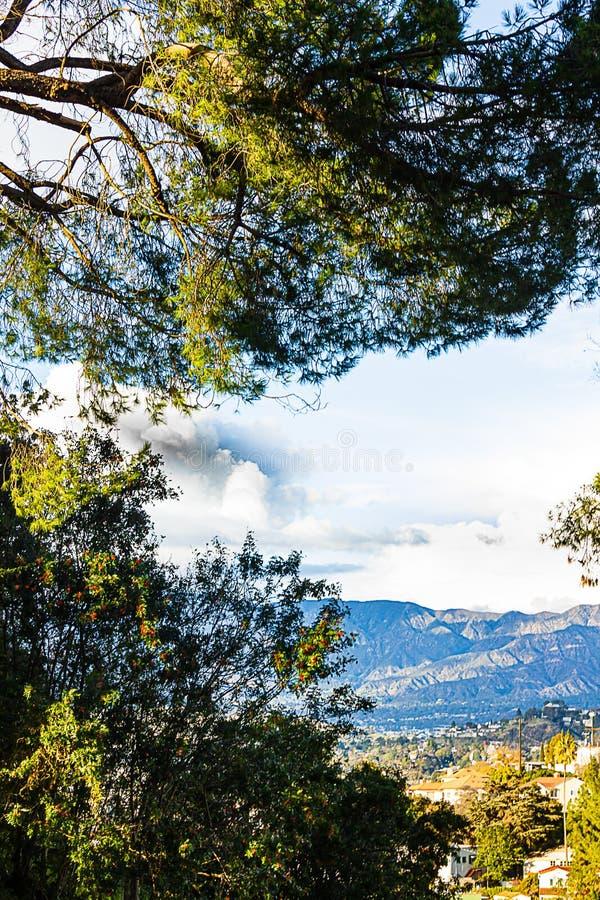 Sempreverdi con la vista panaramic del cielo, delle case della città, dei commerci e delle montagne immagine stock libera da diritti