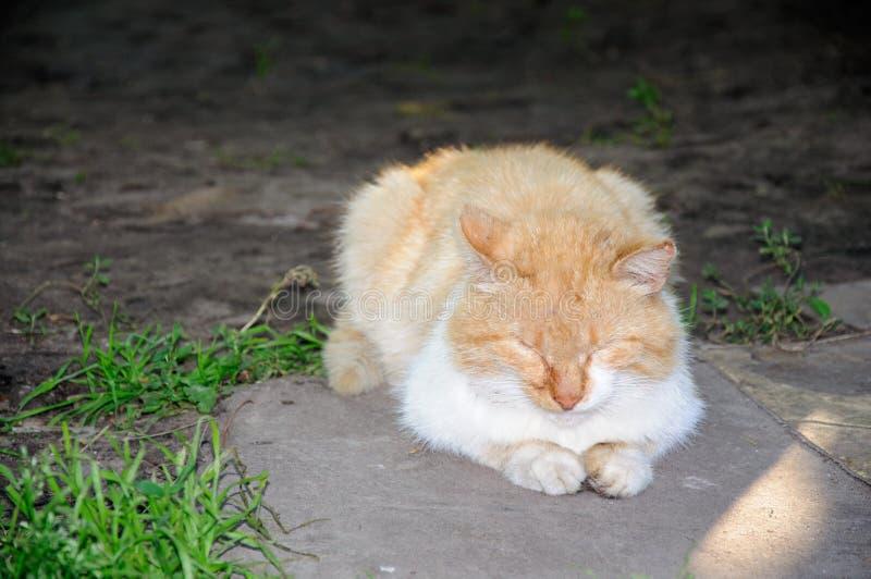 Sen i śliczny kot w ogródzie obrazy stock