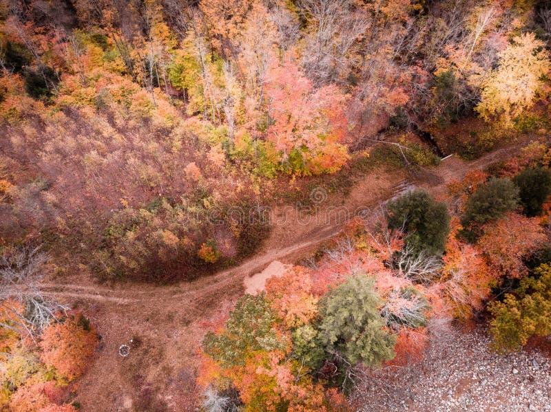 Sen nedgång över en New Hampshire skog royaltyfri fotografi