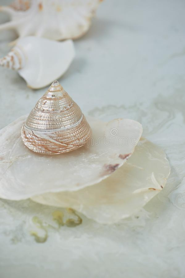 Sen o morzu Skorupy, matka perła, lekki tło fotografia stock