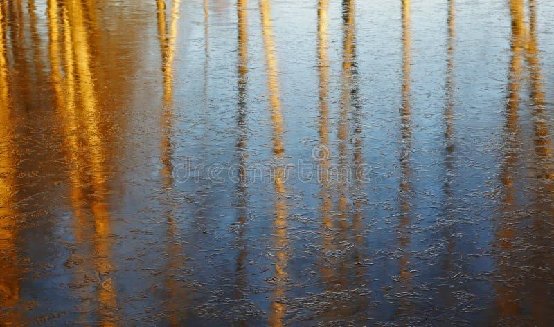 Sena höstfärger: reflexion av kala träd royaltyfri fotografi