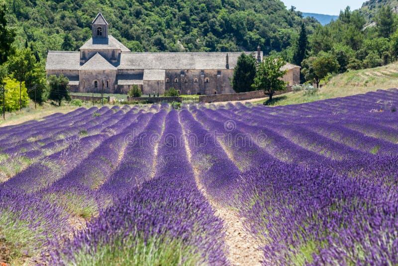 Senanque修道院普罗旺斯法国 免版税库存图片
