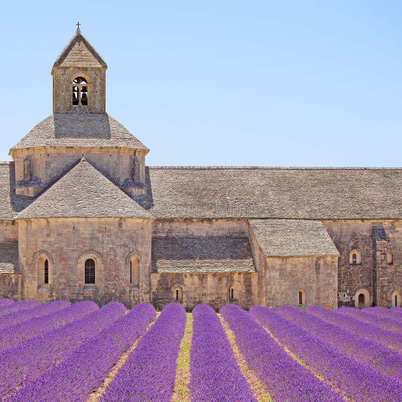 Senanque修道院淡紫色花。 Gordes, Luberon 免版税库存照片