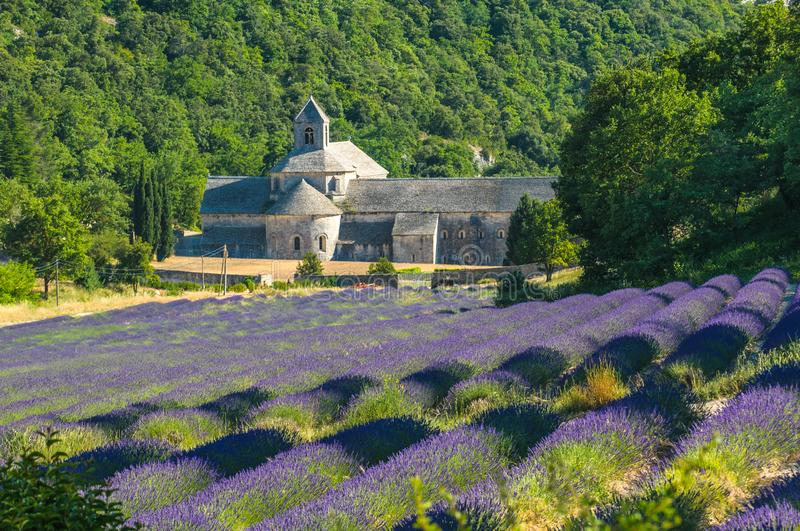 Senanque和开花的淡紫色领域,法国修道院  图库摄影