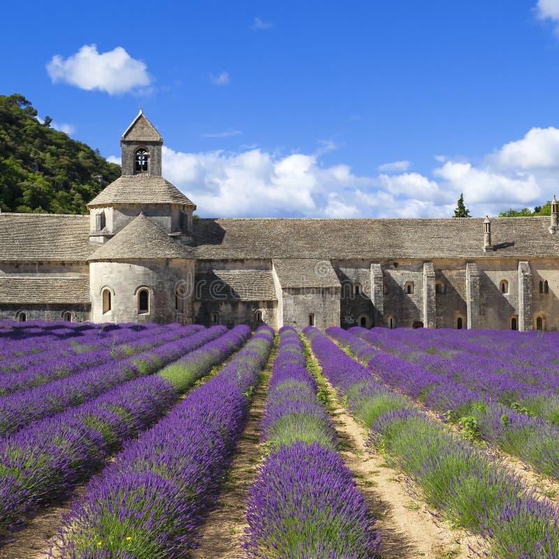 Senanque和淡紫色修道院  免版税图库摄影