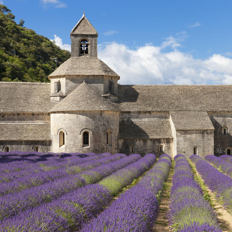 Senanque和lavander领域修道院  库存图片