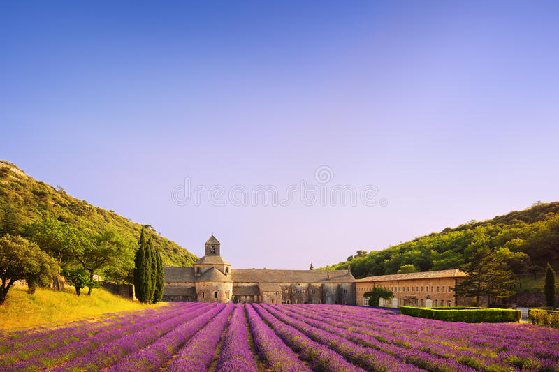 Senanque开花的淡紫色修道院在日落开花 戈尔代, L 免版税库存图片