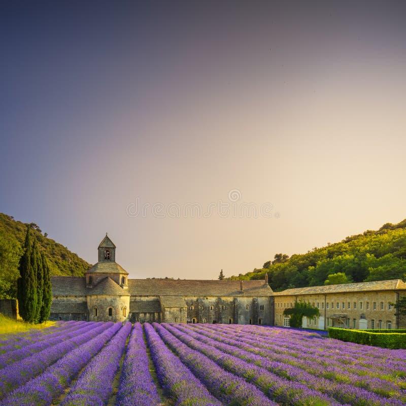 Senanque开花的淡紫色修道院在日落开花 戈尔代, L 库存照片