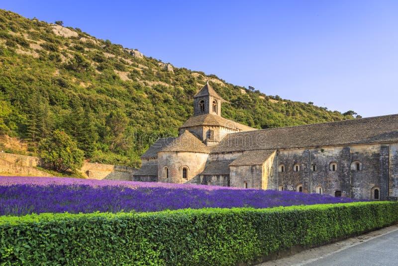 Senanque开花的淡紫色修道院在日落开花 戈尔代, L 图库摄影