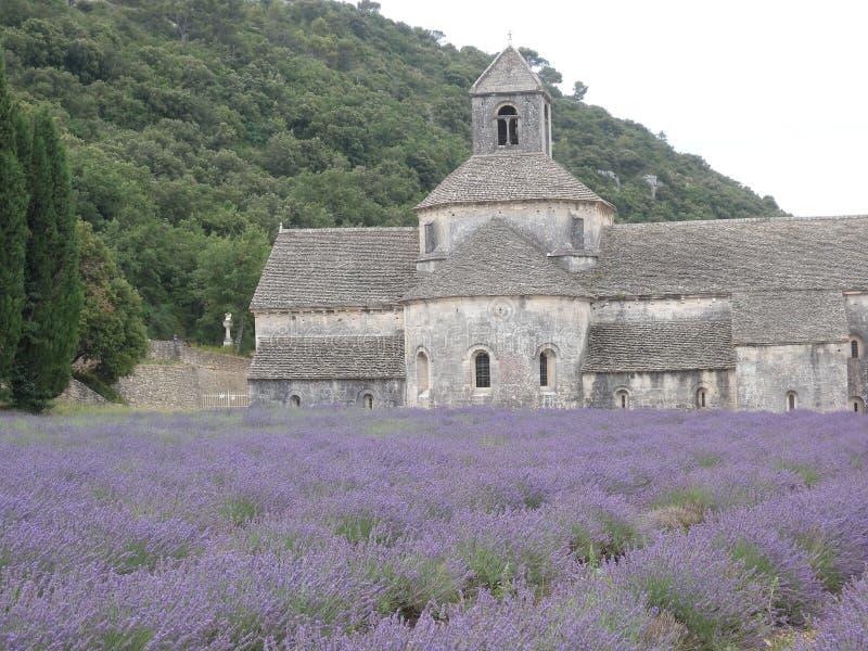 Senanque的修道院lavander戈尔代的Luberon普罗旺斯法国花果树园 库存照片