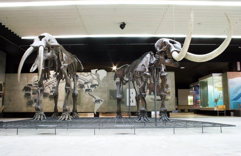 Senckenberg Naturmuseum Frankfurt obrazy stock