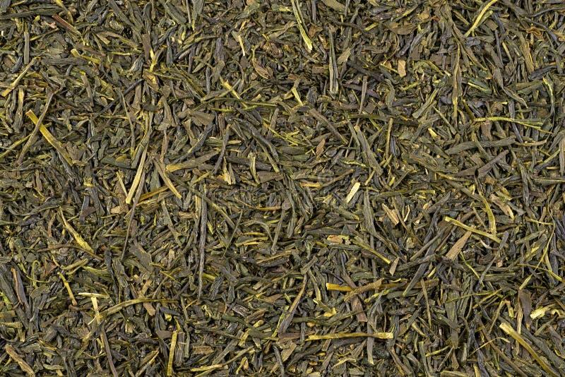 Sencza Tło suszonych zielonych liści herbaty obrazy royalty free