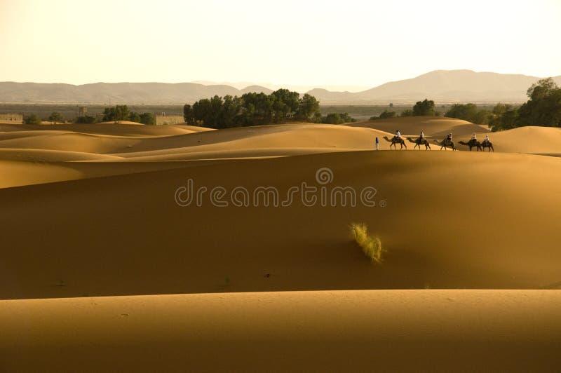 Senderismo de la caravana del camello en desierto imagen de archivo