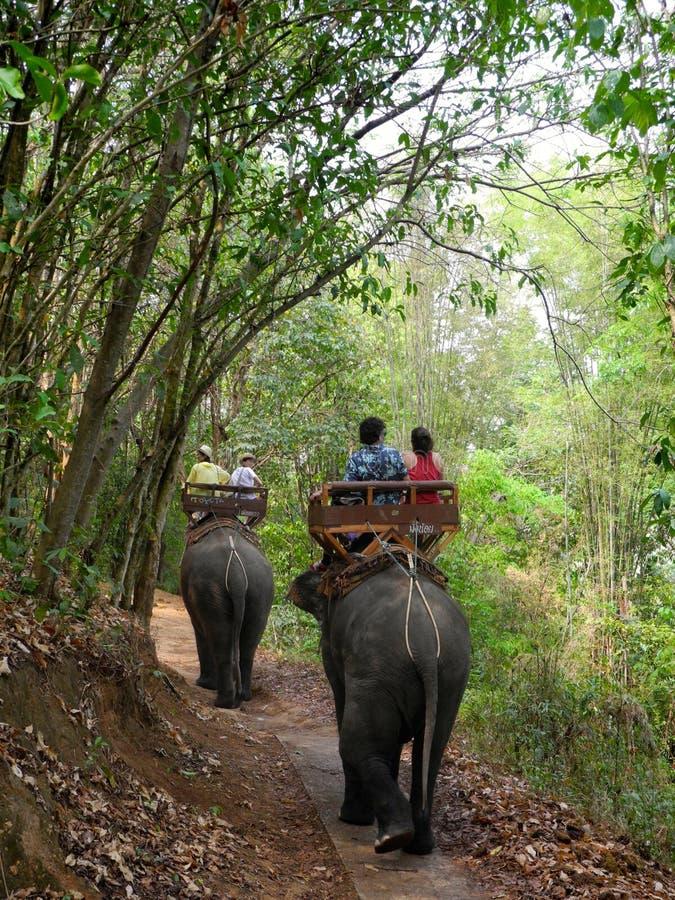 Senderismo del elefante en Tailandia septentrional fotos de archivo libres de regalías