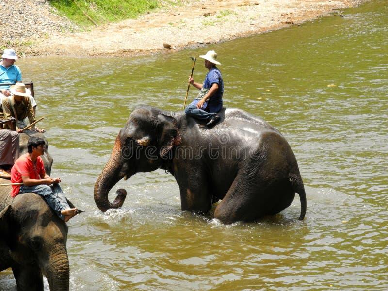 Senderismo del elefante en Tailandia septentrional foto de archivo libre de regalías