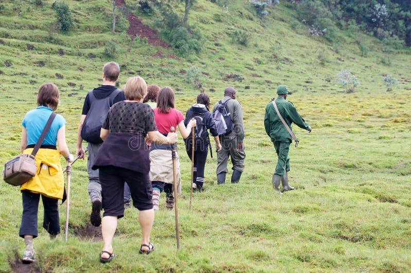 Senderismo del gorila de montaña imágenes de archivo libres de regalías
