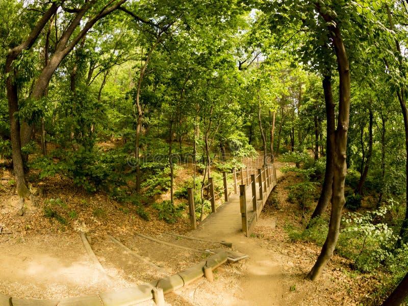 Sendero con la imagen misteriosa verde de Fisheye del bosque foto de archivo libre de regalías