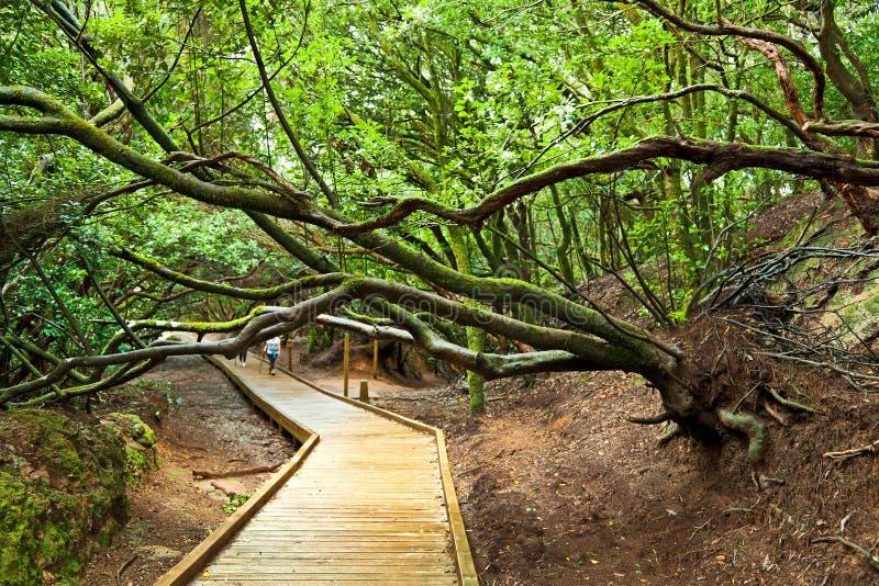 Sendero de Los Sentidos, Anaga Nationalpark, Teneriffa lizenzfreies stockfoto
