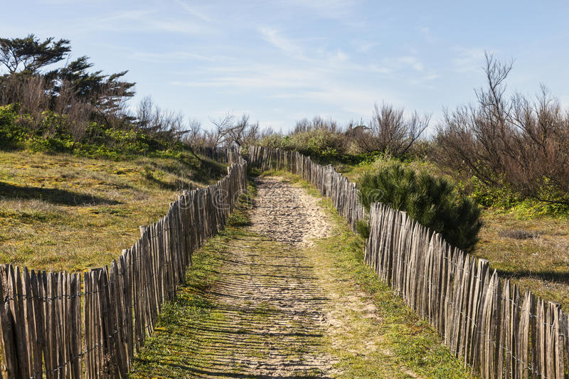 Sendero en la duna atlántica en Bretaña imagen de archivo libre de regalías