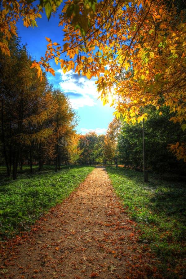 Sendero en un parque pintoresco del otoño del otoño fotografía de archivo libre de regalías