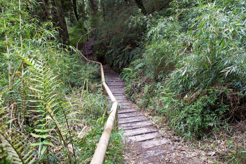 Sendero en Vicente Perez Rosales National Park, Chile fotografía de archivo