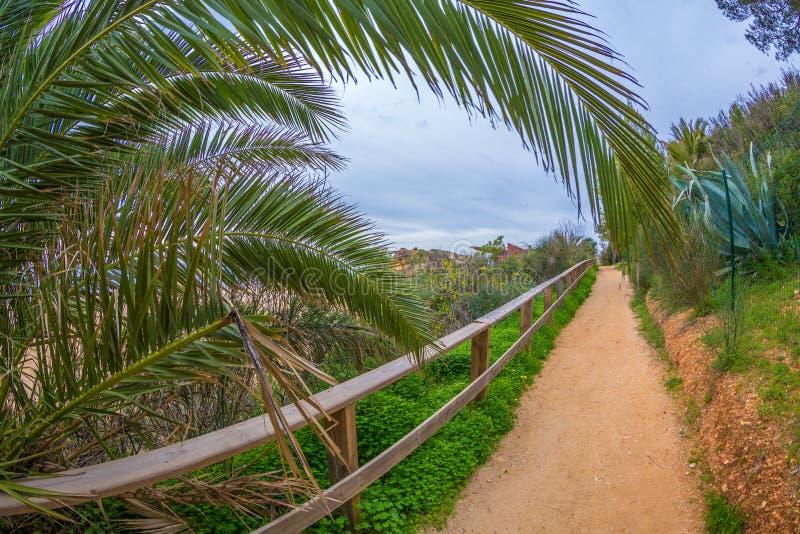 Sendero entre árboles verdes hermosos y paso debajo de una palma datilera a lo largo de la playa famosa en Alvor, Algarve, Portug imagen de archivo libre de regalías