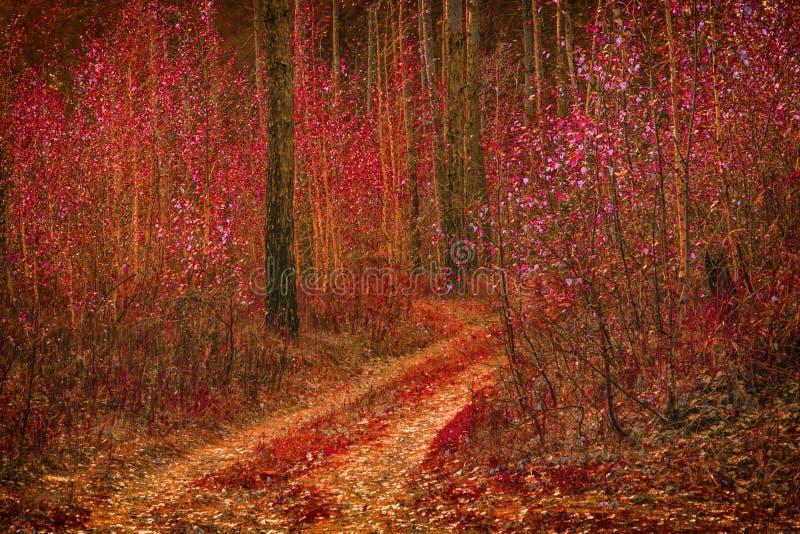 Sendero fantástico que lleva al bosque a lo largo de los árboles de abedul jovenes imagen de archivo libre de regalías