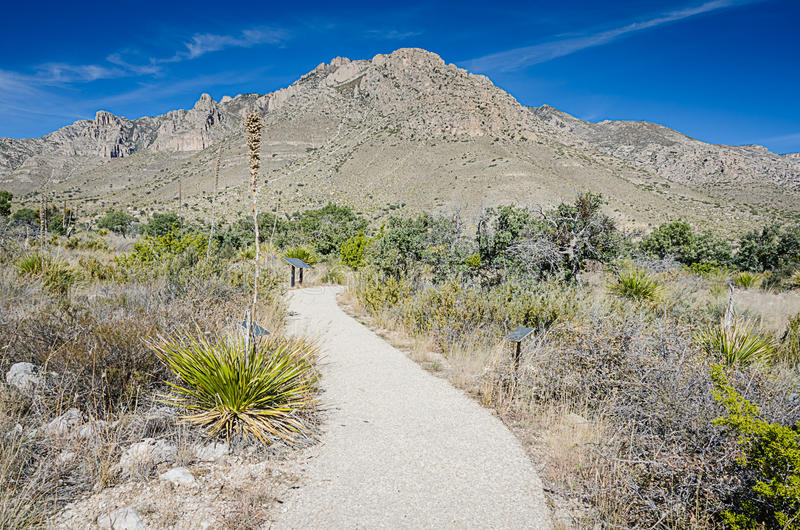 Sendero - Guadalupe Mountains National Park imagen de archivo libre de regalías