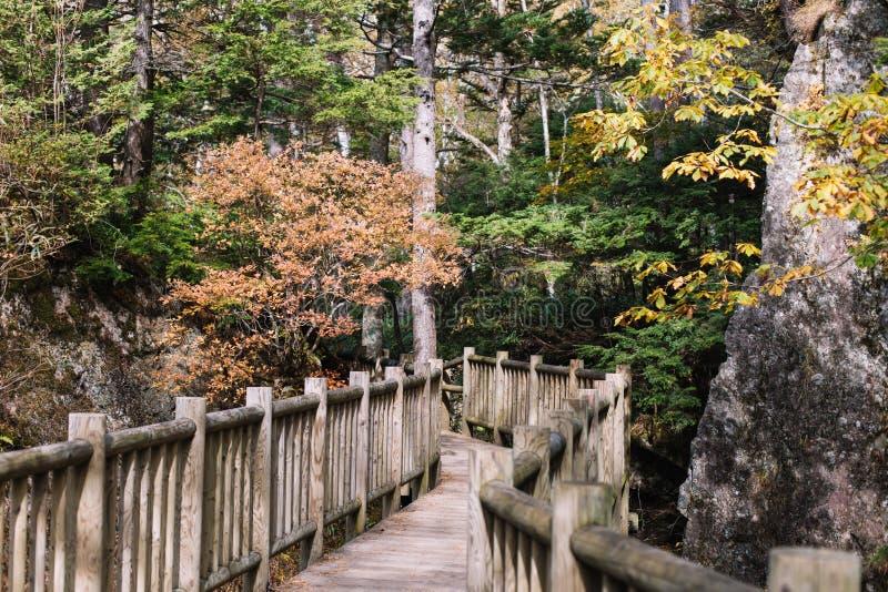 Senderos de Kamikochi con el ?rbol en la m?s forrest durante la estaci?n del oto?o por el walkpath de madera fotos de archivo