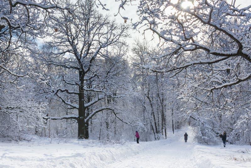 Senderos en el parque de la ciudad de Moscú Árboles en nieve Los ciudadanos de los veraneantes caminan en el parque y el esquí fotografía de archivo