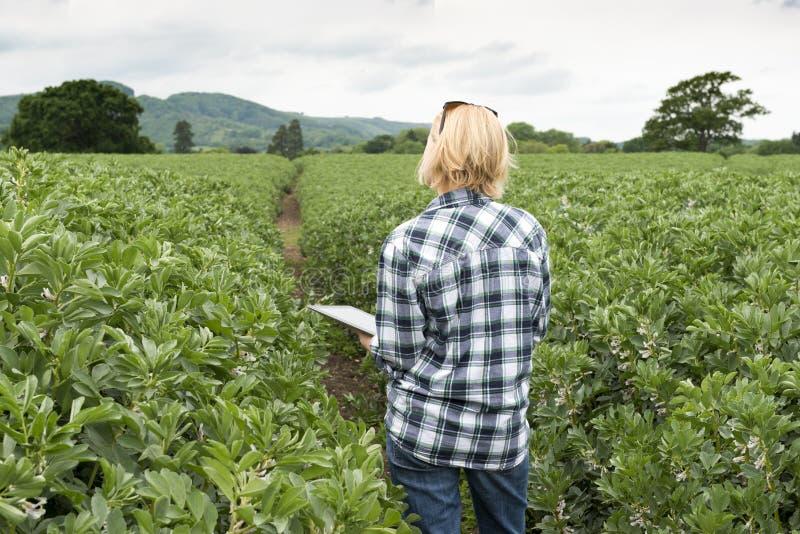 Senhora Clutching uma tabuleta que olha sobre uma plantação imagens de stock