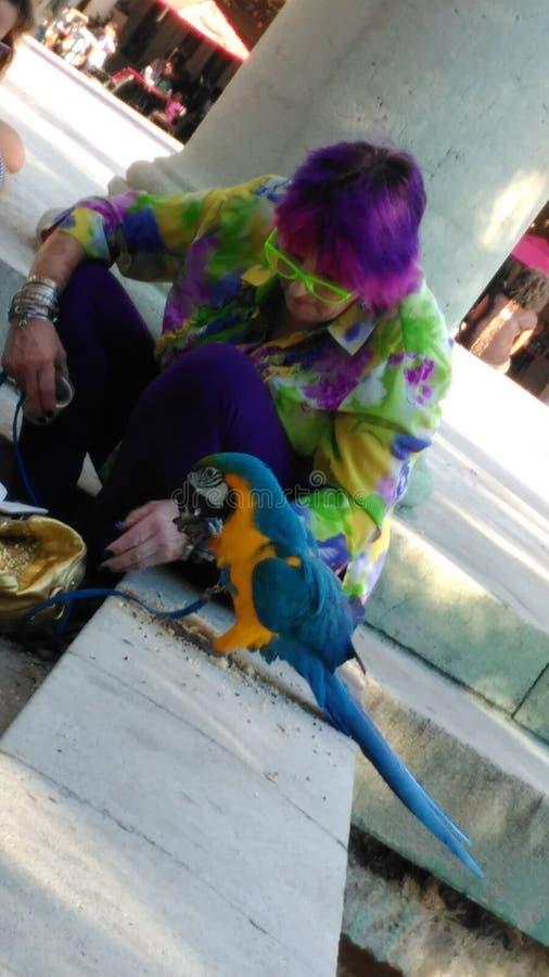 Senhora colorida do pássaro fotografia de stock royalty free