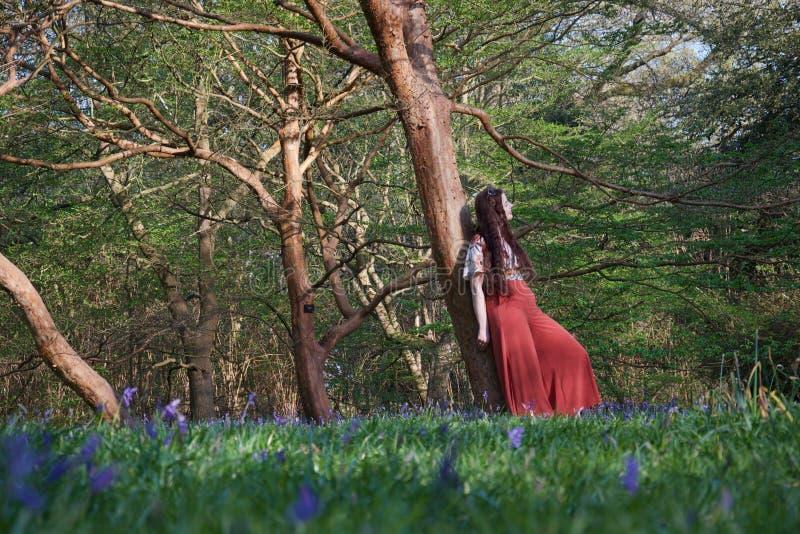 A senhora elegante inclina-se contra uma árvore em uma floresta inglesa na mola adiantada, com as campainhas no primeiro plano foto de stock