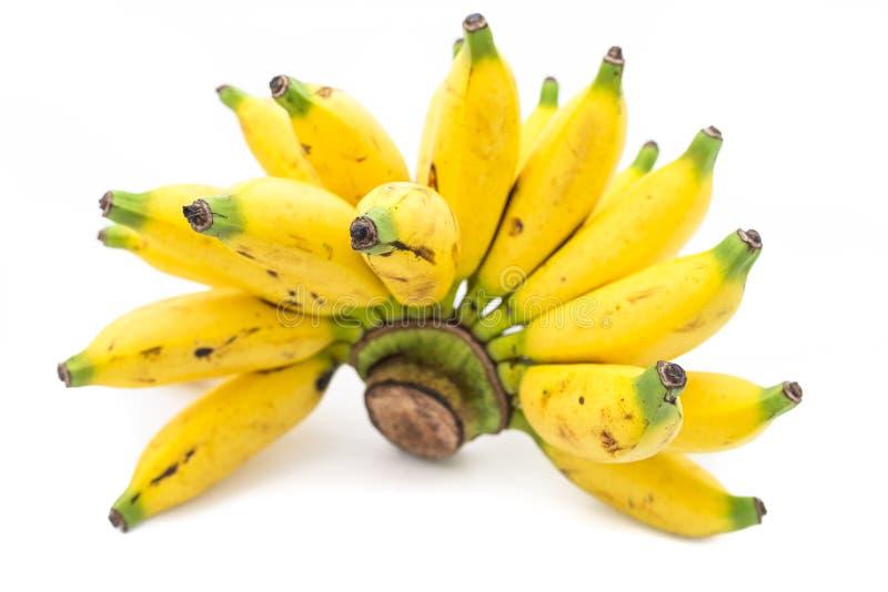 Senhora Finger Banana fotos de stock royalty free