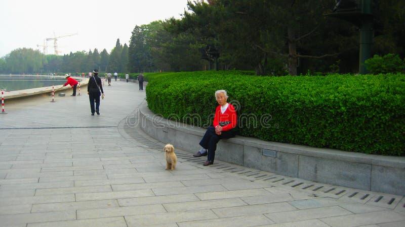 Senhora idosa e cão imagem de stock royalty free