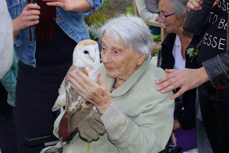A senhora idosa guarda uma coruja de celeiro nova selvagem com ternura imagens de stock