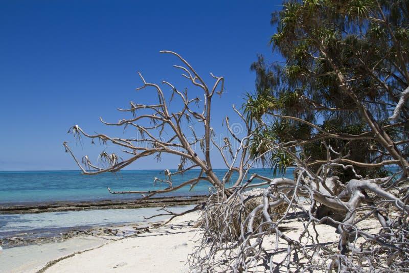 Senhora Musgrave Island imagem de stock royalty free