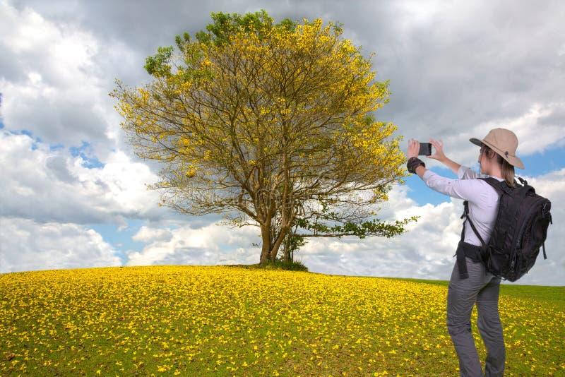 Senhora nova do caminhante que toma uma imagem do telefone celular de uma árvore bonita imagens de stock royalty free