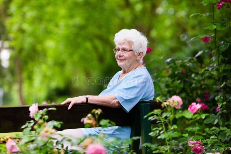 Senhora superior no jardim de rosas fotos de stock royalty free