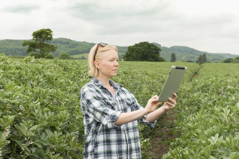 Senhora Using uma tabuleta com folha e montes no fundo fotografia de stock royalty free