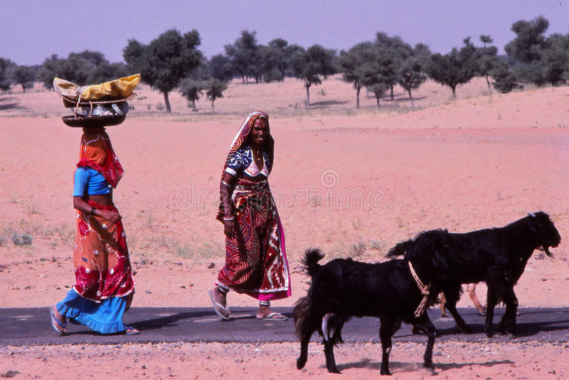 Senhoras que levam cestas, Jaisalmer, Índia foto de stock royalty free