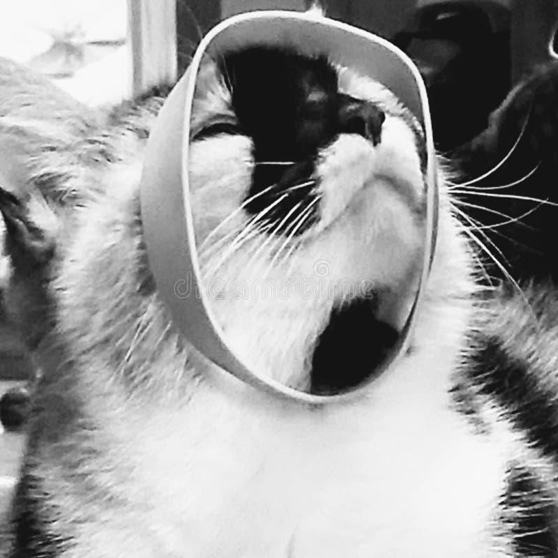 Senhorita Kitty com um Rubberband imagem de stock