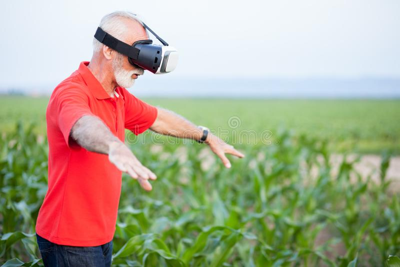 Senior agronomist or farmer standing in corn field and using VR goggles. Senior agronomist or farmer in red polo shirt standing in green corn field and using stock photos