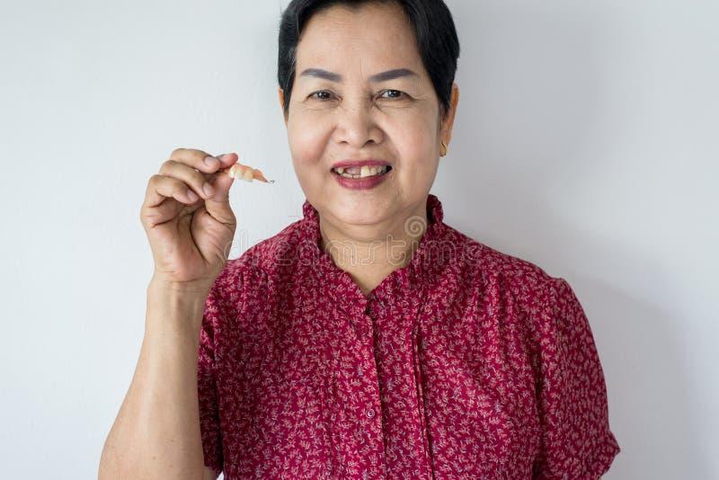 Senior Asian woman is holding dentures in hands,Dental prosthesis,False teeth,Close up. Senior Asian female is holding dentures in hands,Dental prosthesis,False royalty free stock image