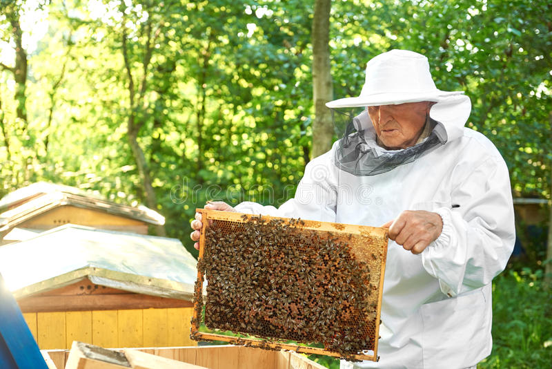 Senior beekeeper working at his apiary stock image