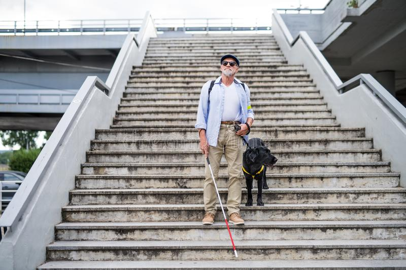 Senior blind man with guide dog walking down the stairs in city. A senior blind man with guide dog walking down the stairs in city stock photos