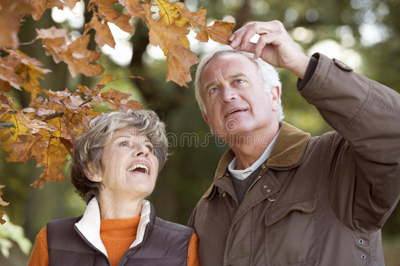 A senior couple admiring an autumn leaf royalty free stock images
