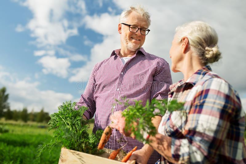 Senior couple with box of carrots on farm. Farming, gardening, agriculture, harvesting and people concept - senior couple with box of carrots at farm stock image